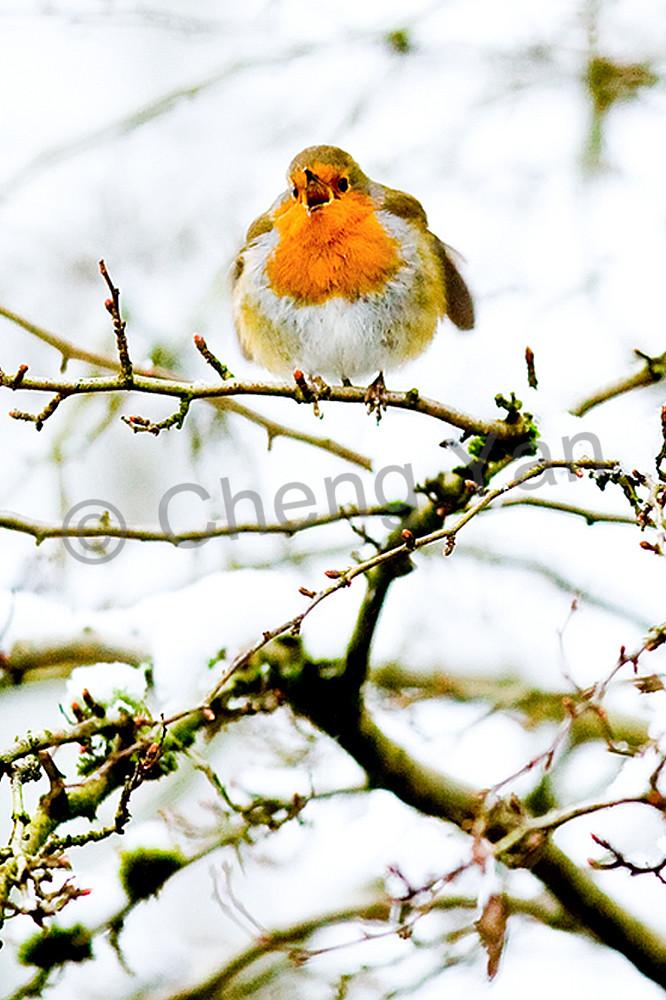 Robins 010 Photography Art | Cheng Yan Studio