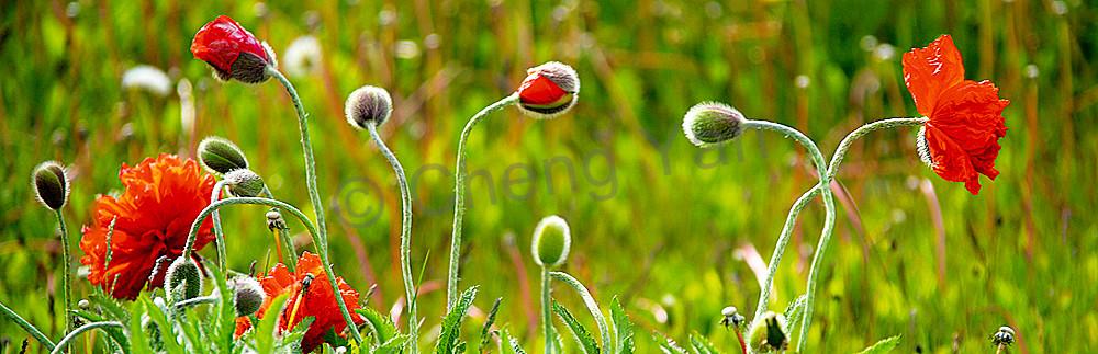 Flowers And Plants 002 Photography Art   Cheng Yan Studio