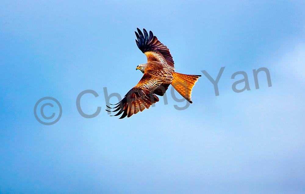 09co8731b Photography Art | Cheng Yan Studio