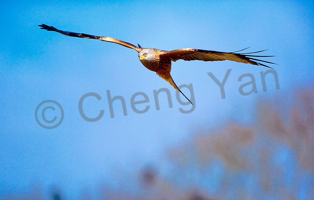 09co8977 Photography Art | Cheng Yan Studio