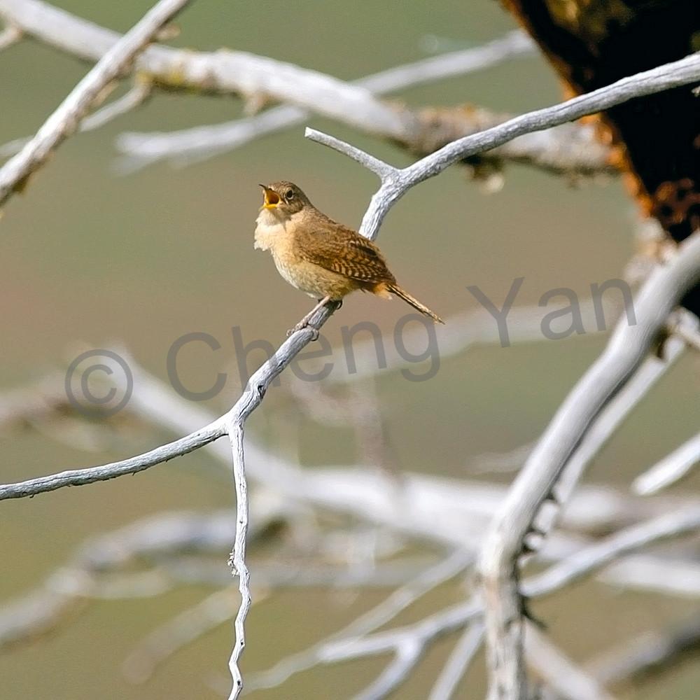 South American Birds 036 Photography Art | Cheng Yan Studio