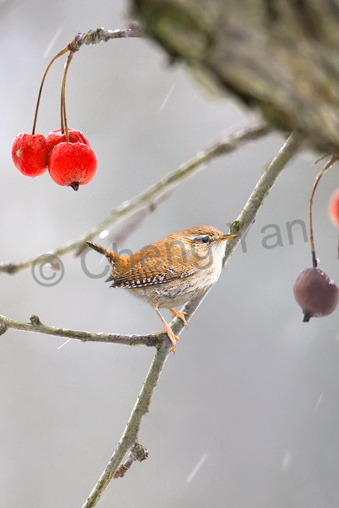 Garden Birds 09 Photography Art | Cheng Yan Studio