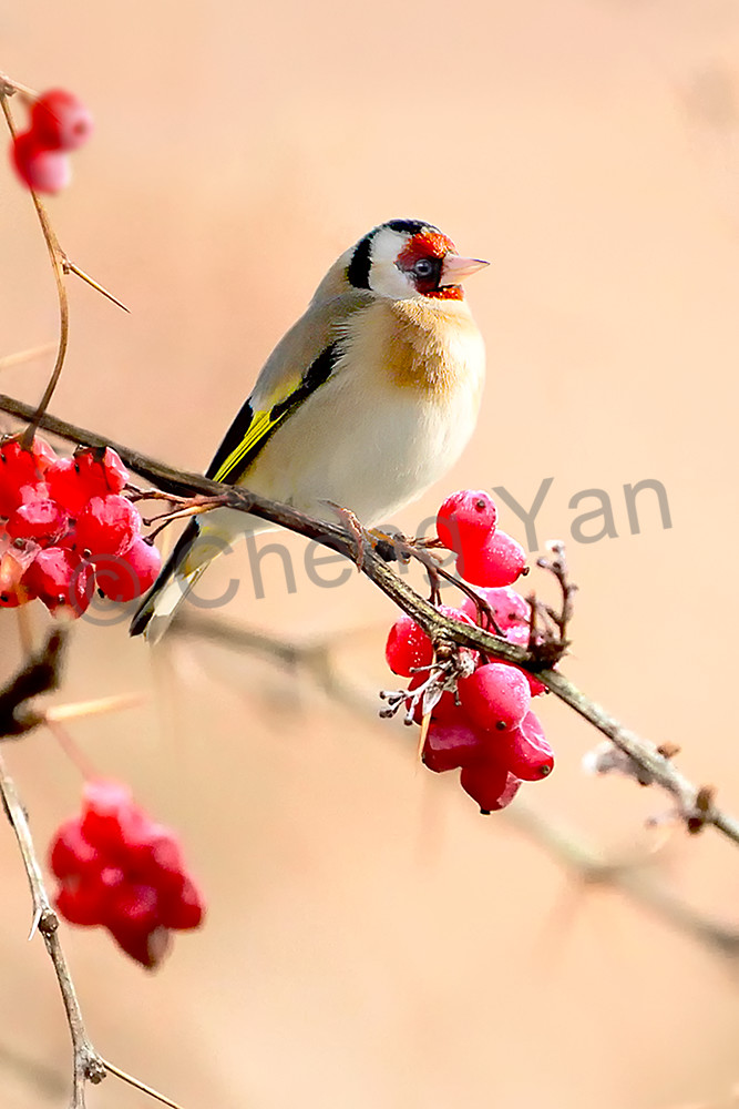 Garden Birds 04 Photography Art | Cheng Yan Studio