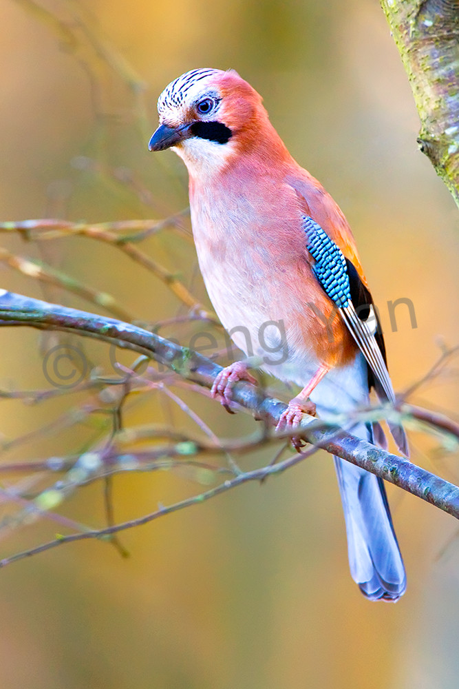 Garden Birds 12 Photography Art | Cheng Yan Studio
