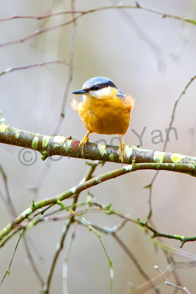 Garden Birds 10 Photography Art | Cheng Yan Studio