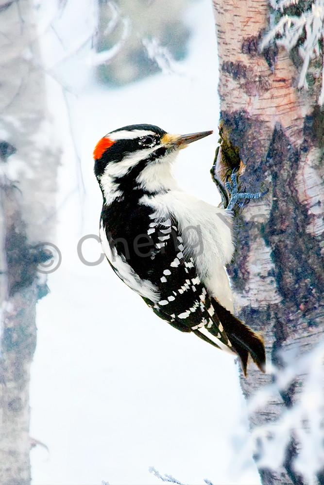 Garden Birds 15 Photography Art | Cheng Yan Studio