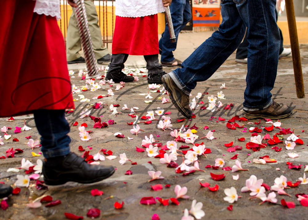 Walking On Rose Petals | Travel Photo For Sale