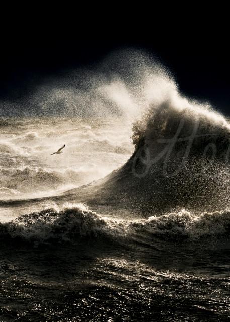 Majestic Photography Art | Trevor Pottelberg Photography