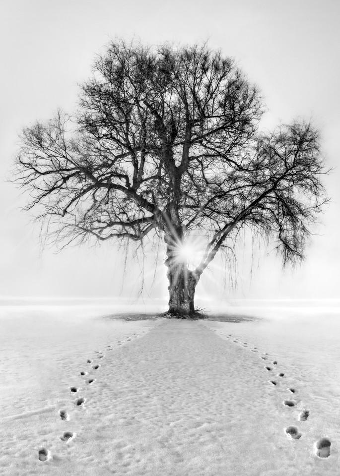 Meet Me Behind The Kissing Tree Photography Art   Trevor Pottelberg Photography