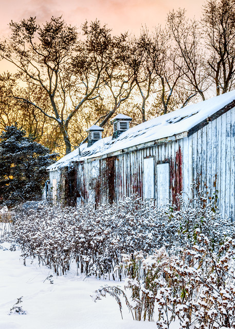 Resting In The Autumn Snow Photography Art | Trevor Pottelberg Photography
