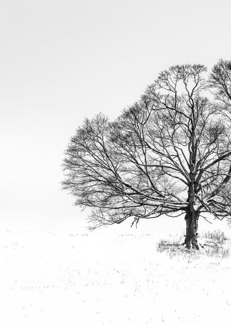 Art In Nature Photography Art | Trevor Pottelberg Photography
