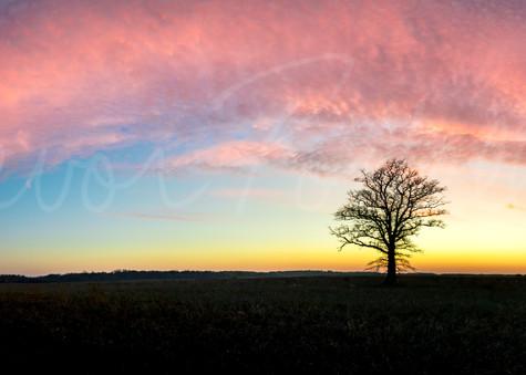 A Farmer's Solitude Photography Art   Trevor Pottelberg Photography