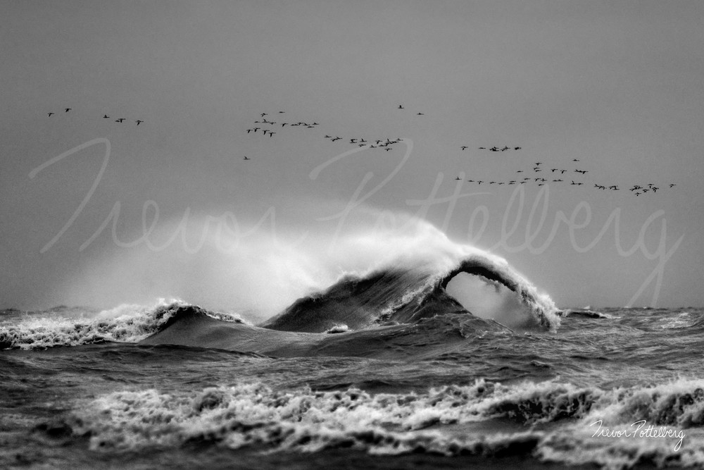 Wings Over Water Photography Art | Trevor Pottelberg Photography