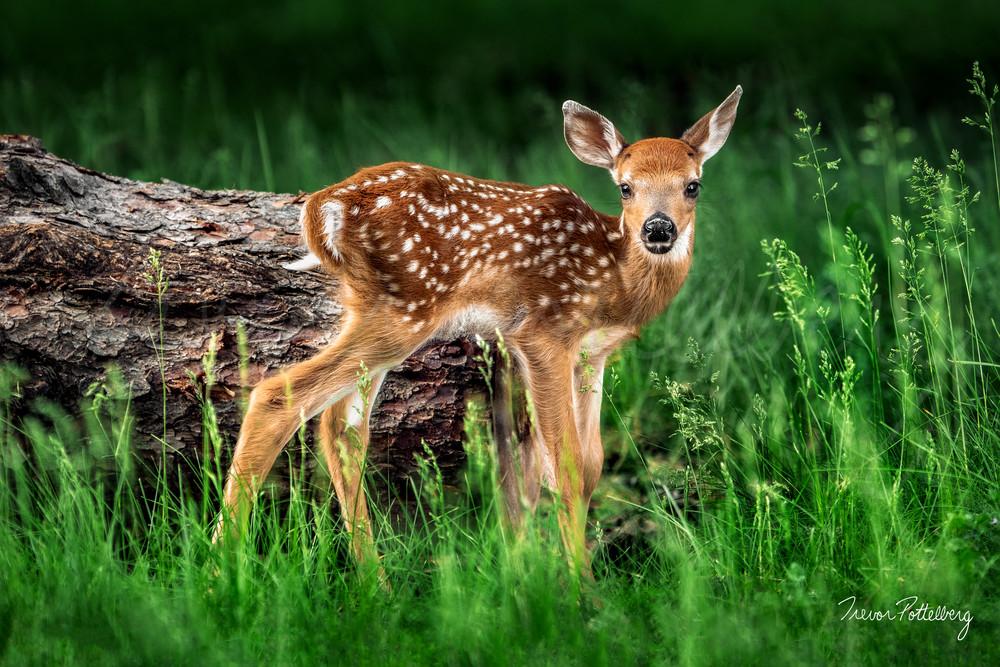 Bambi Photography Art | Trevor Pottelberg Photography