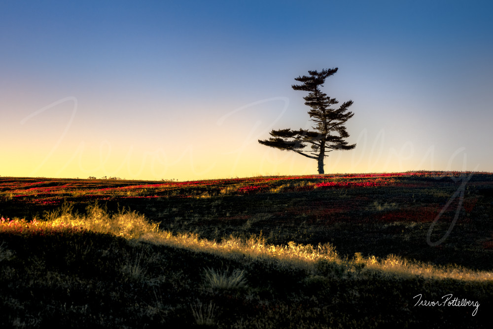 King Of The Hill Photography Art   Trevor Pottelberg Photography