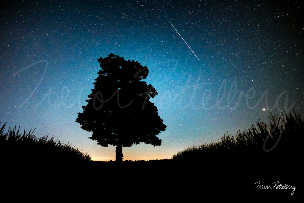 The Tree Of Hope Photography Art | Trevor Pottelberg Photography