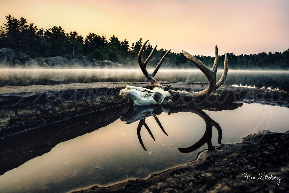Nature Of The Beast Photography Art | Trevor Pottelberg Photography