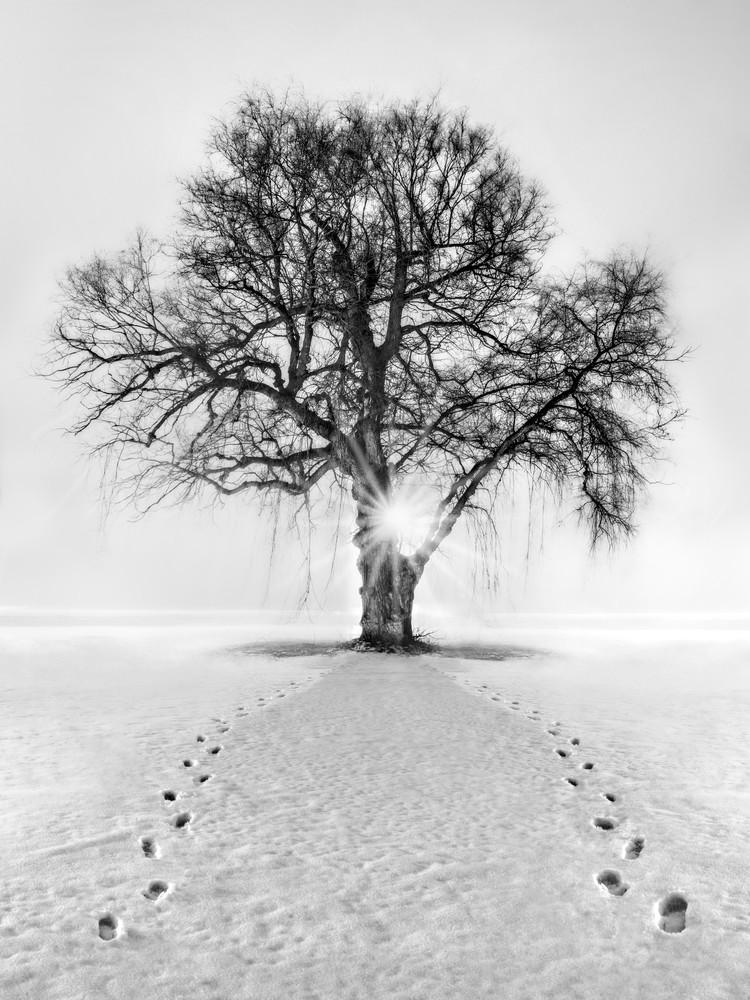 Meet Me Behind The Kissing Tree Photography Art | Trevor Pottelberg Photography