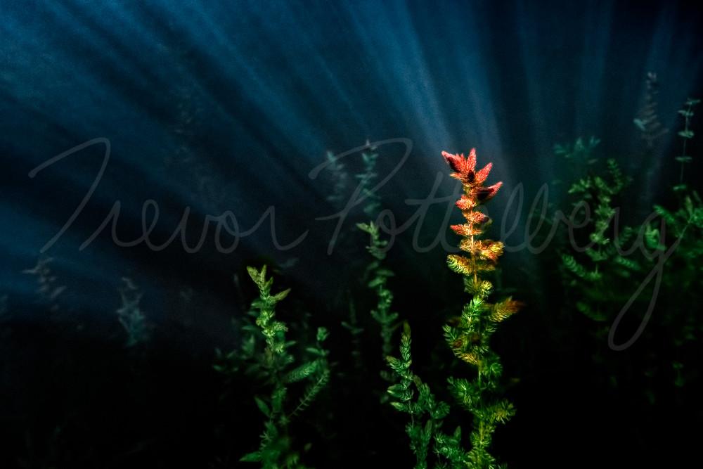 Under The Sea Photography Art | Trevor Pottelberg Photography