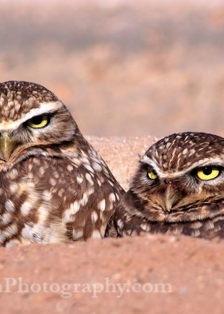 Burrowing Owls print, Jim Parkin Fine Art Photography