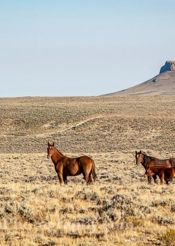 Wyoming's Wild Horses | Jim Parkin Fine Art Photography