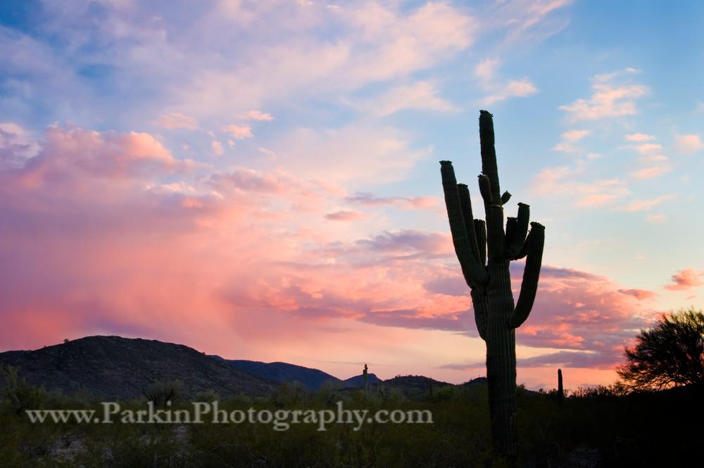 Saguaro Silhouette print, Jim Parkin Fine Art Photography