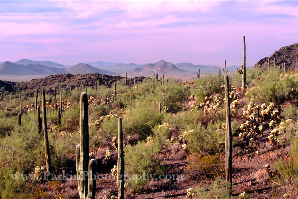 Saguaro sunset print, Jim Parkin Fine Art Photography