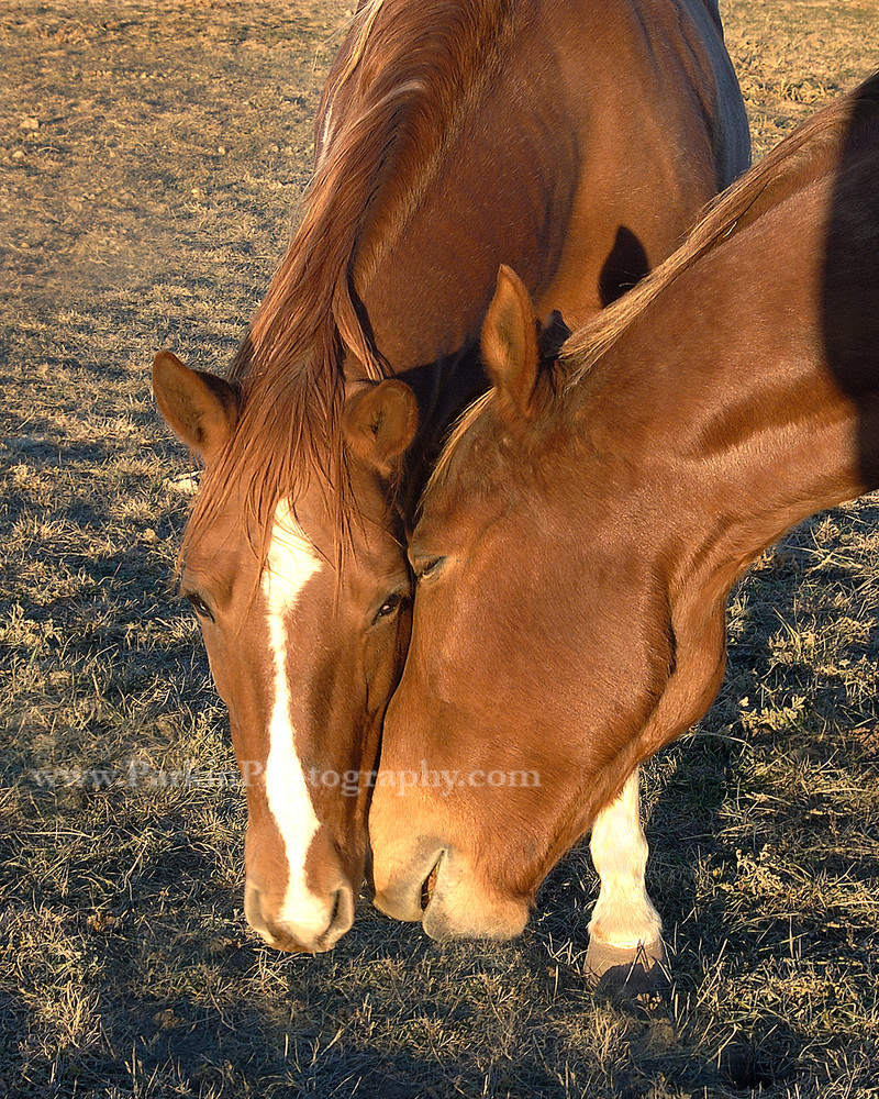 Horses | Jim Parkin Fine Art Photography