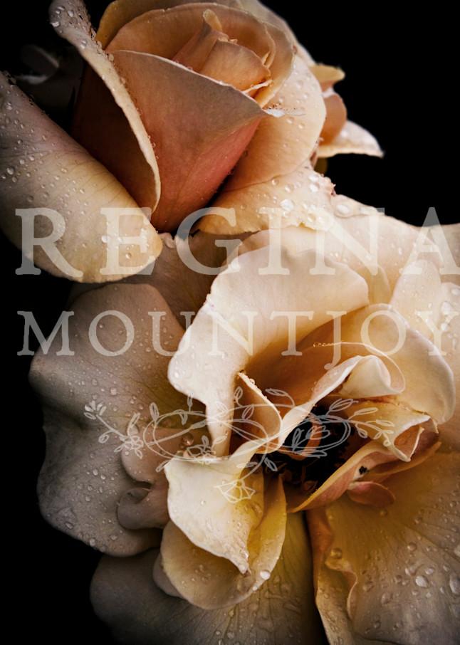 Reverence Roses