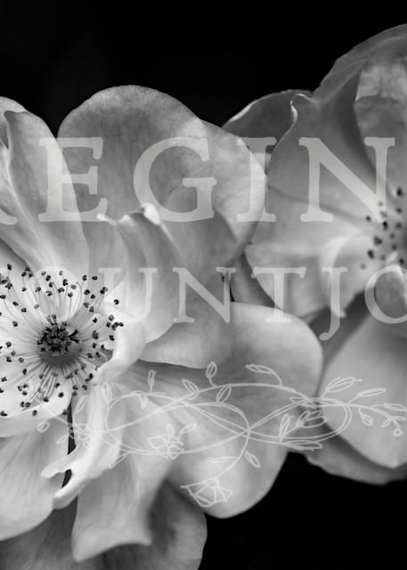 Devotion Roses