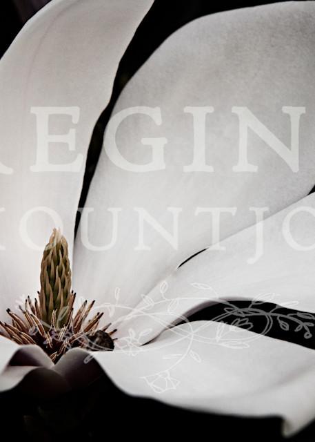 Queen of Peace Magnolia