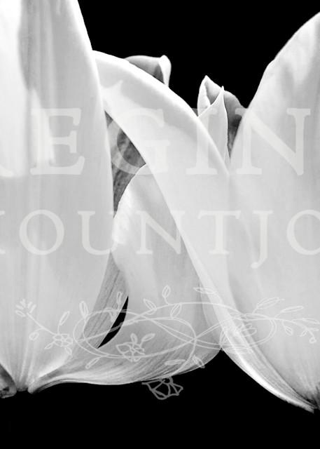 Angel Wings Tulips