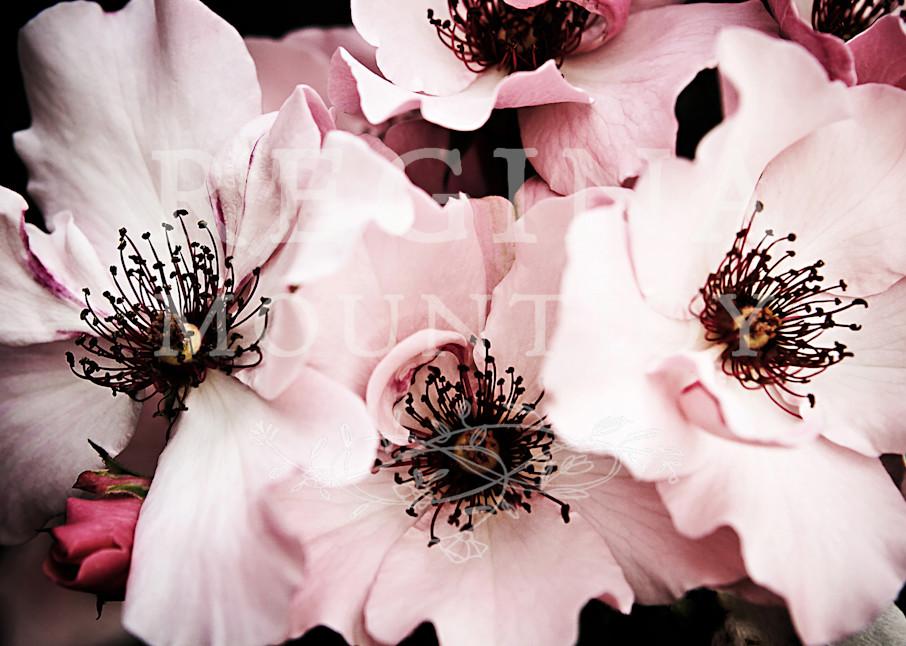 Serendipity Roses