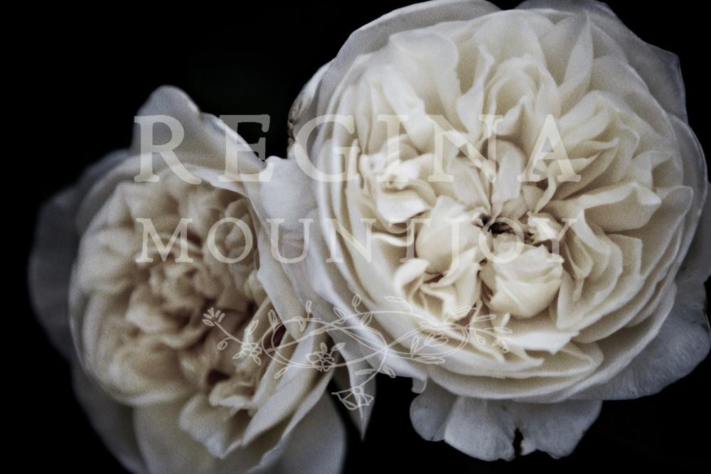 Petticoat Roses