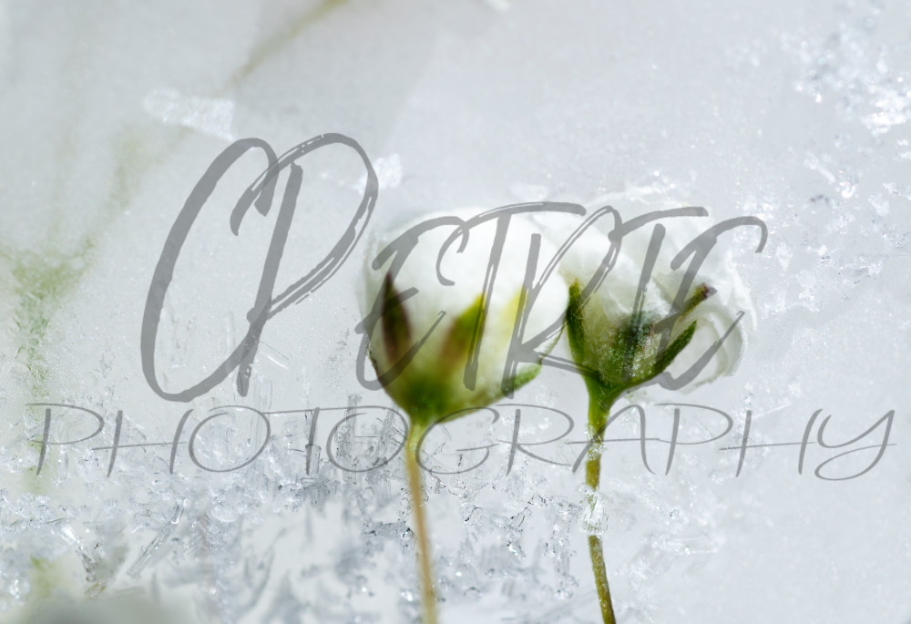 Fine Art Photography Gelid Amalgamation 01