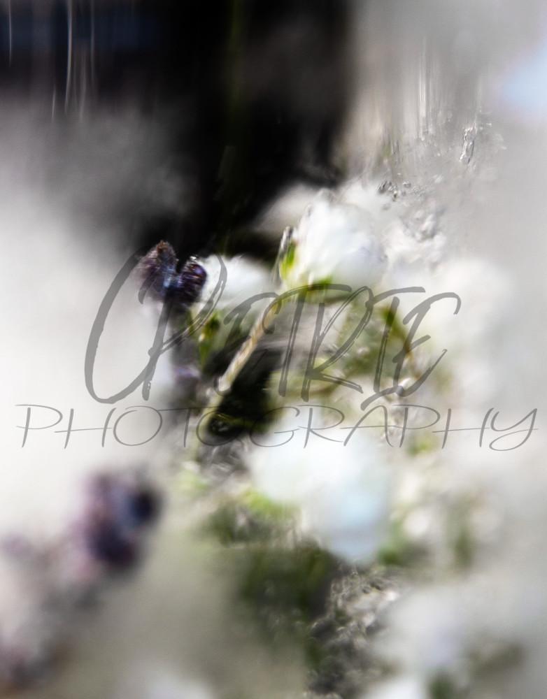 Fine Art Photography Gelid Amalgamation 05