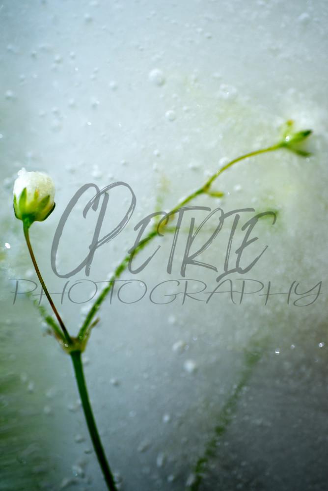 Fine Art Photography Gelid Amalgamation 08