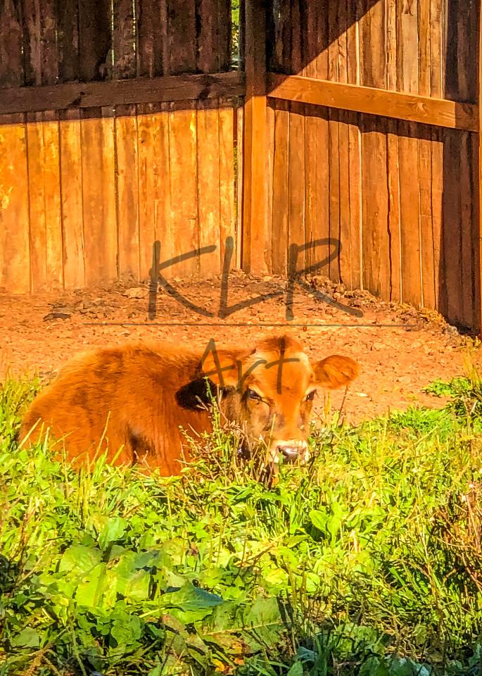 Gaf Animals Nick Nap Time Art | KLR ART