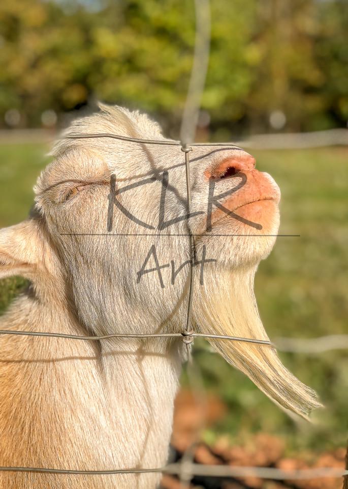 Gaf Animals 21 Little John The Goat Art | KLR ART