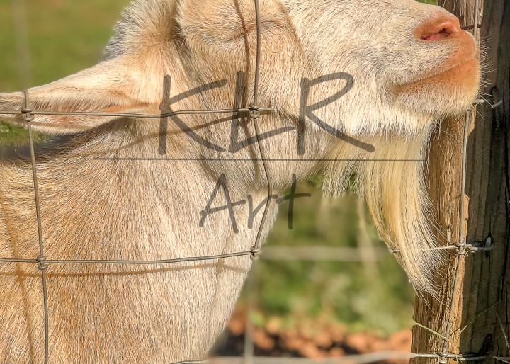 Gaf Animals 19 Little John The Goat Art | KLR ART