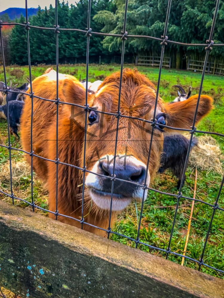 Gaf Animals 1 Nick Art | KLR ART