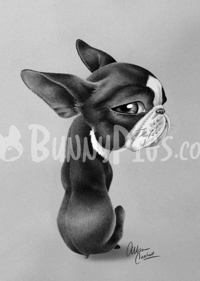 Side Eye Sour Art | BunnyPigs