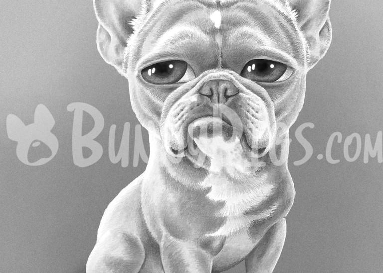 Amari The Frenchie Art | BunnyPigs