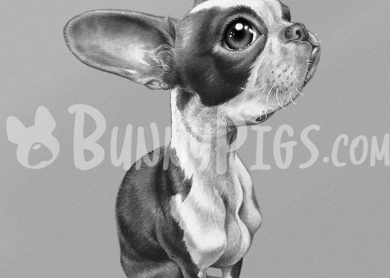 Pretty Sitting Penny Art | BunnyPigs