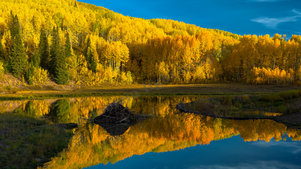 mountain light images fall afternoon stillness at a beaver pond on kebler pass. No wind and a mirror like reflection in the water