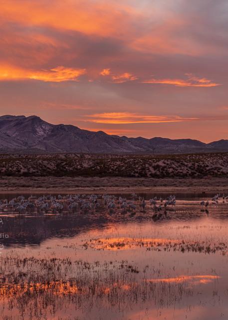 Cranes Tucking In Under a Marmalade Sky:Bosuqe del Apache