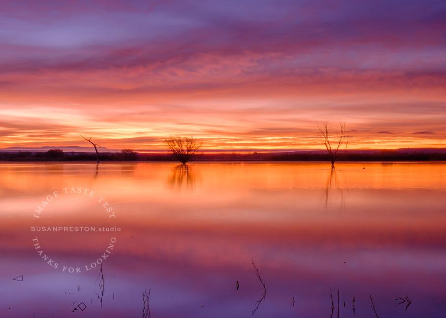 Promise of Dawn : Bosque del Apache Landscape