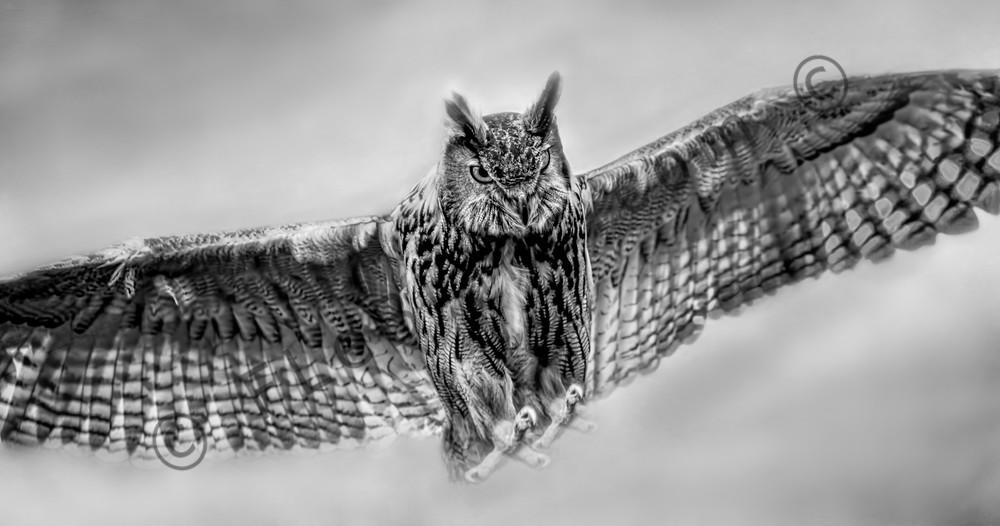 Great Horned Tiger Owl In Flight Wall Decor|Wall Decor fleblanc