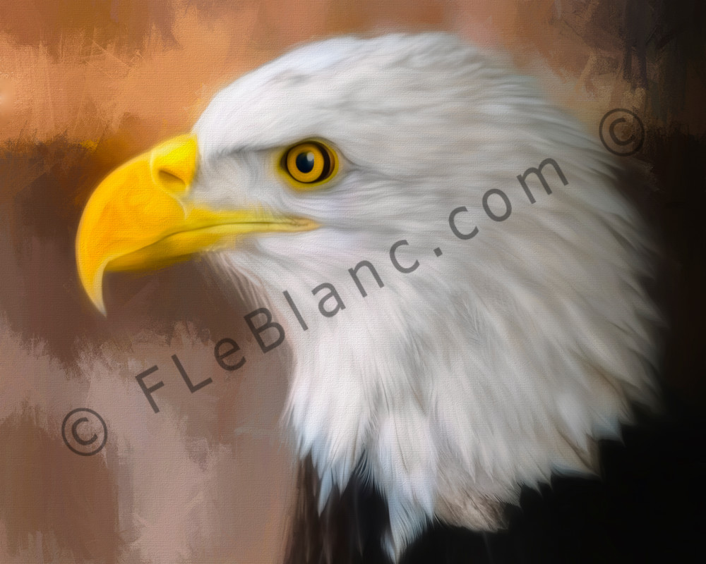 Bald Eagle Predatory Majestic Raptor|Wall Decor fleblanc