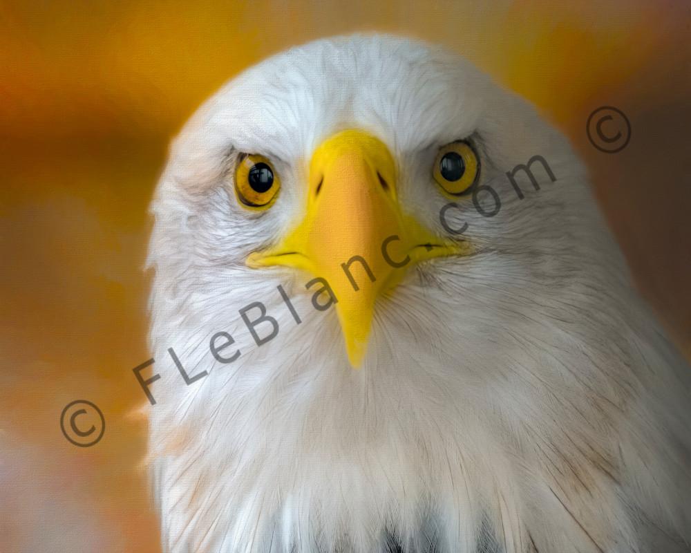 Majestic Endangered Bald Eagle Hunter|Wall Decor fleblanc